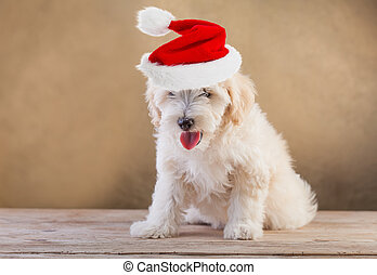 Doggy with santa hat