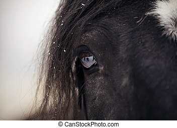 Eye of a sporting horse closeup.