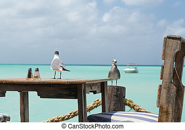 Seagulls in Aruba are ready for lunch - On Pelican Pier, an...