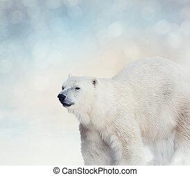 Polar, Schnee, bär