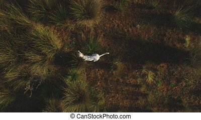 Top view of hunting dog - Hunting dog tracking, top view