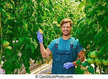 Friendly agronomist checking tomatoes in greenhouse.