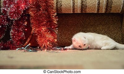Beige kitten playing with Christmas lights and tinsel -...