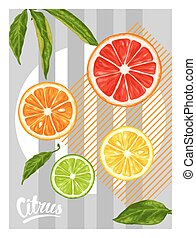 Poster with citrus fruits slices. Mix of lemon lime...