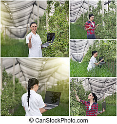 Agronomist in orchard - Collage of young woman agronomist...