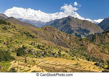 Rice field under Dhaulagiri Himal and snowy Himalayas...