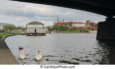 Beautiful, white swans close to Wawel castle in Krakow,...