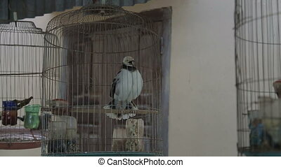 bird cages and poultry feed itself in a cage adorable...
