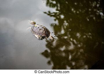 Dead turtle entangled in fishing nets