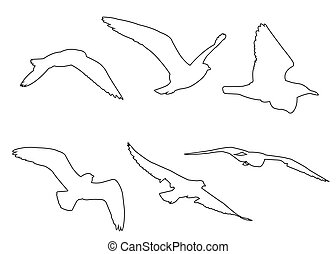 Vector paths of Seagull set on the white background