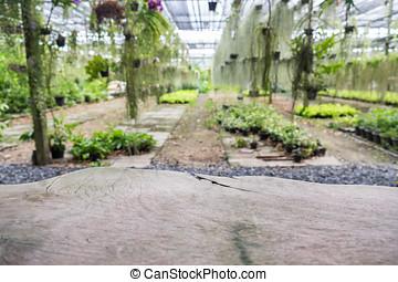 Plank wood on ornamental plant in garden