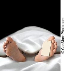 corps, personne, mensonge, mort,  morgue