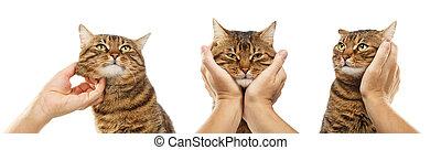 diferente, aislado, gato, Plano de fondo, rayado, posturas,...