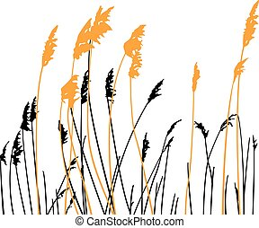 Steppe grass on white background - Silhouette of steppe...