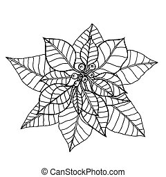 vector illustration - Poinsettia. - Hand drawn vector...