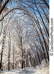 Snowy forest. Cold winter. nature