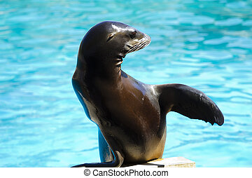 Beautiful sea lion playing in a show of animals - Beautiful...
