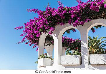Bougainvillea on a balcony in Puerto de la Cruz (Tenerife,...
