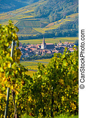 Vineyard and townscape Kaysersberg, Alsace in France -...