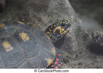 the turtle , Wild life animal. - the turtle , Wild life...