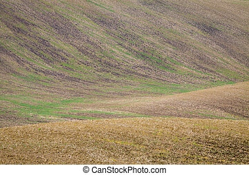Background of Moravian fields, area called the Moravian...