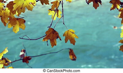 Tree branch with yellow autumn leaves over water.