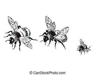 Vector engraving antique illustration of honey flying bees, isol