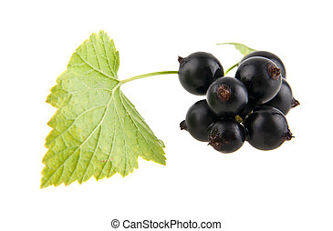 black currants on the white background
