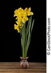 spring yellow daffodil flowers
