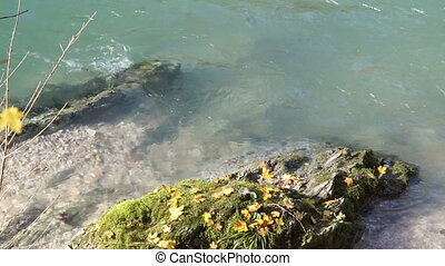 Large rock, overgrown with moss about mountain river - Large...