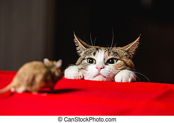 Cat in an ambush on a mouse hunt. Deadlock. - Cat in an...