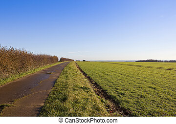 bridleway and hedgerow - a section of bridleway with a...
