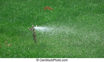 Sprinkler irrigation in park - On lawn in park Sprinkler...