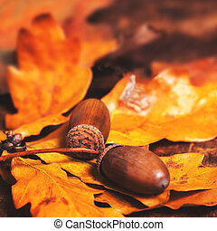 Autumn leaves with acorns over wooden background with empty copy space for text. 	Abstract autumn backdrop