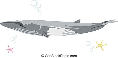 finback whale icon isolated on white background cartoon realistic whale