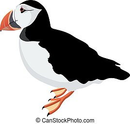 atlantic puffin bird detalised on white background, modern...