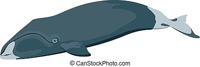 bowhead whale icon isolated on white background cartoon realistic whale