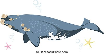 Right whale whale icon isolated on white background cartoon...