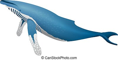 humpback whale icon isolated on white background cartoon...