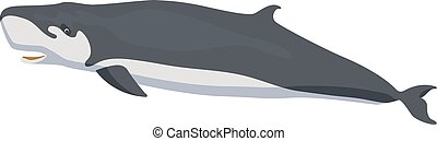 pygmy sperm whale whale icon isolated on white background...