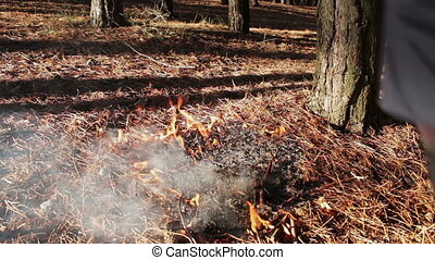 forest ground fire under pine tree - fire in the autumn pine...