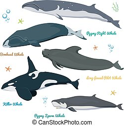 Set of Whales from the world Killer Whale Pygmy Sperm Whale, Bowhead whale, Pygmy Right Whale, long-finned pilot whale