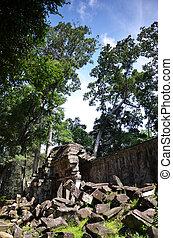 Ta Prohm Temple, Angkor, Cambodia - Classical picture of Ta...