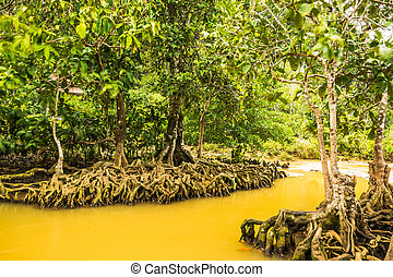 Tha Pom Klong Song Nam Mangrove forest conservation and...