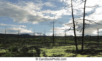 Dead Forest near volcanoes stock footage video Kamchatka...