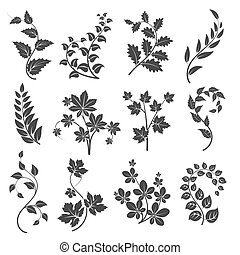 Curly branches silhouettes with leaves isolated on white...