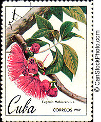 Stamp printed in Cuba shows image of Eugenia Malaccencis,...