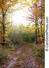 Yellow autumn colors in the forest