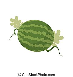 Watermelon growing isolated. Fruit with leaves