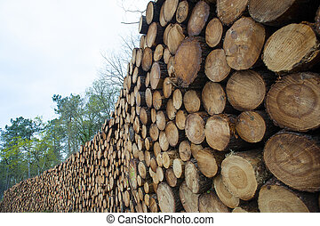Pine logs in the forest, Firewood as renewable energy source...